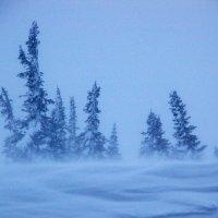 метель в горах Шории :: Евгений Фролов