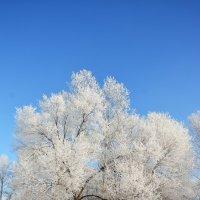 Зимние украшения :: юрий Амосов