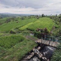 секреты орошения рисовых полей на Бали :: Александр