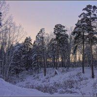 Короткий день в декабре :: Владимир Холодный