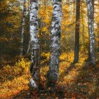 Про свет в осеннем лесу... :: Александр Никитинский