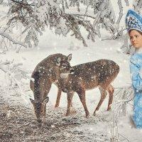 Зимняя сказка. :: Наталья Малкина