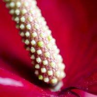 Цветок :: Julia Rietveld