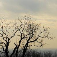 Начало зимы :: Юрий Гайворонский
