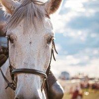 Портрет боевого коня :: Елена Оберник