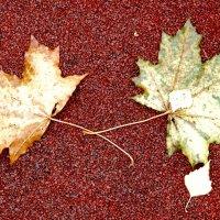 листья :: Андрей Столяров