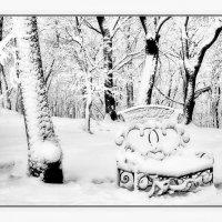 В зимнем парке :: Евгений Турков