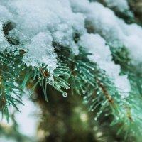 Первый снег :: Ольга Криворучко