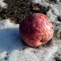 Яблоко на снегу :: Асылбек Айманов