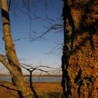 Течет река Волга... :: Павел Зюзин
