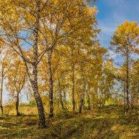 Пейзаж :: Nn semonov_nn