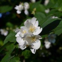 Белый цветок :: Екатерина