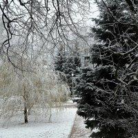 Зима в городе :: Милешкин Владимир Алексеевич