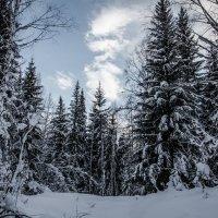 winter :: Марк Додонов