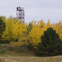 Деревья осенью :: Максим Воробьев