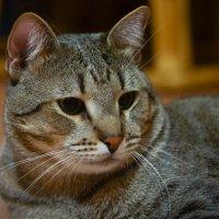 Котик мой :: Дмитрий
