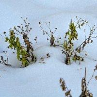 Во снегах первых... :: Юрий