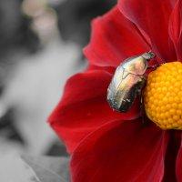 Майский жук... :: Ирина Жеребятьева