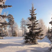 В лесу родилась елочка... :: И.В.К. ))