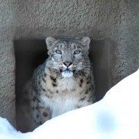 зоопарк :: Gavrila68 -Женя