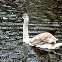 На птичьей площадке в парке Революции :: Нина Бутко