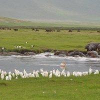 """Танзания. Национальный парк """"Нгоронгоро"""". :: Елена Савчук"""