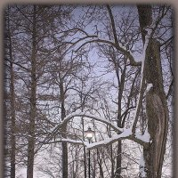Парковая тишина зимой... :: Tatiana Markova