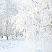 Зима, зимний лес, березы в снегу :: Алена Булдина