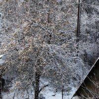Зимний сад :: -Галина -