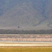 Танзания. Нгоронгоро. Фламинго. :: Елена Савчук