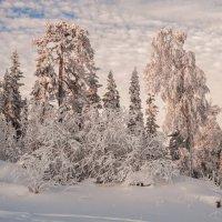 Сказочный лес :: vladimir