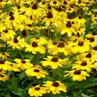Бал цветов. :: Чария Зоя