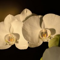 Орхидея расцвела на подоконнике-2 :: Александр