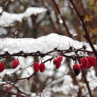 ледяная гусеница :: валя