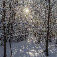 Зимнее солнце :: Valeriy Piterskiy