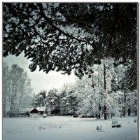 сегодня снова выпал снег :: ВладиМер