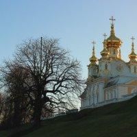 Нежные краски декабря :: Вера Моисеева