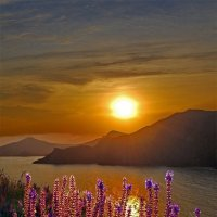 цветочный закат :: viton