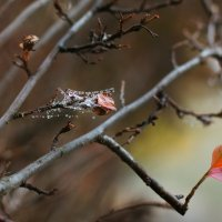 поздняя осень :: Ирина Панкова