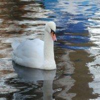 Белый лебедь на пруду... :: Тамара (st.tamara)
