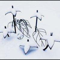 Цветы зимы - железные цветы ... :: Irina-77 Владимировна