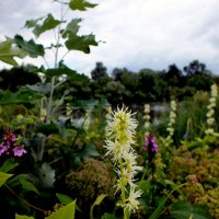 полевые цветы полесья 3 :: Александр Прокудин