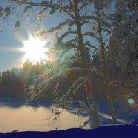Зима в лесу :: Валентин Кузьмин