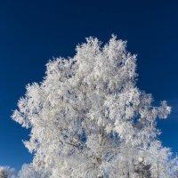 В зимнем наряде :: Анатолий Иргл