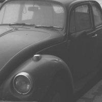beetle :: Евгений Розыев