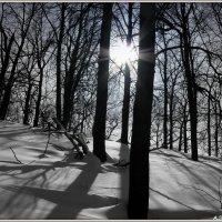 Зимнее солнышко :: Андрей Заломленков