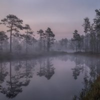 Беззвучно стелется туман. :: Фёдор. Лашков