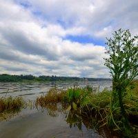 Река Волга. :: Николай Е