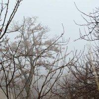 Луганск. Город в тумане :: Наталья (ShadeNataly) Мельник