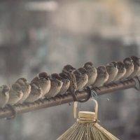 Пернатая армия... :: NюRа;-) Ковылина